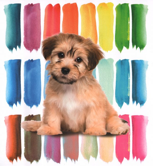 Quilt copriletto COLOR DOG matrimoniale